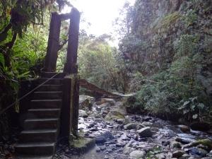 Jungle et forêt tropicale